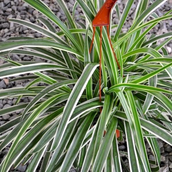 Interior Amp Tropical Plants Orange County Wholesale Nursery