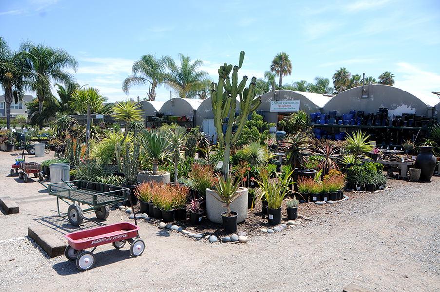 Interior Tropical Plants Orange County Whole Nursery