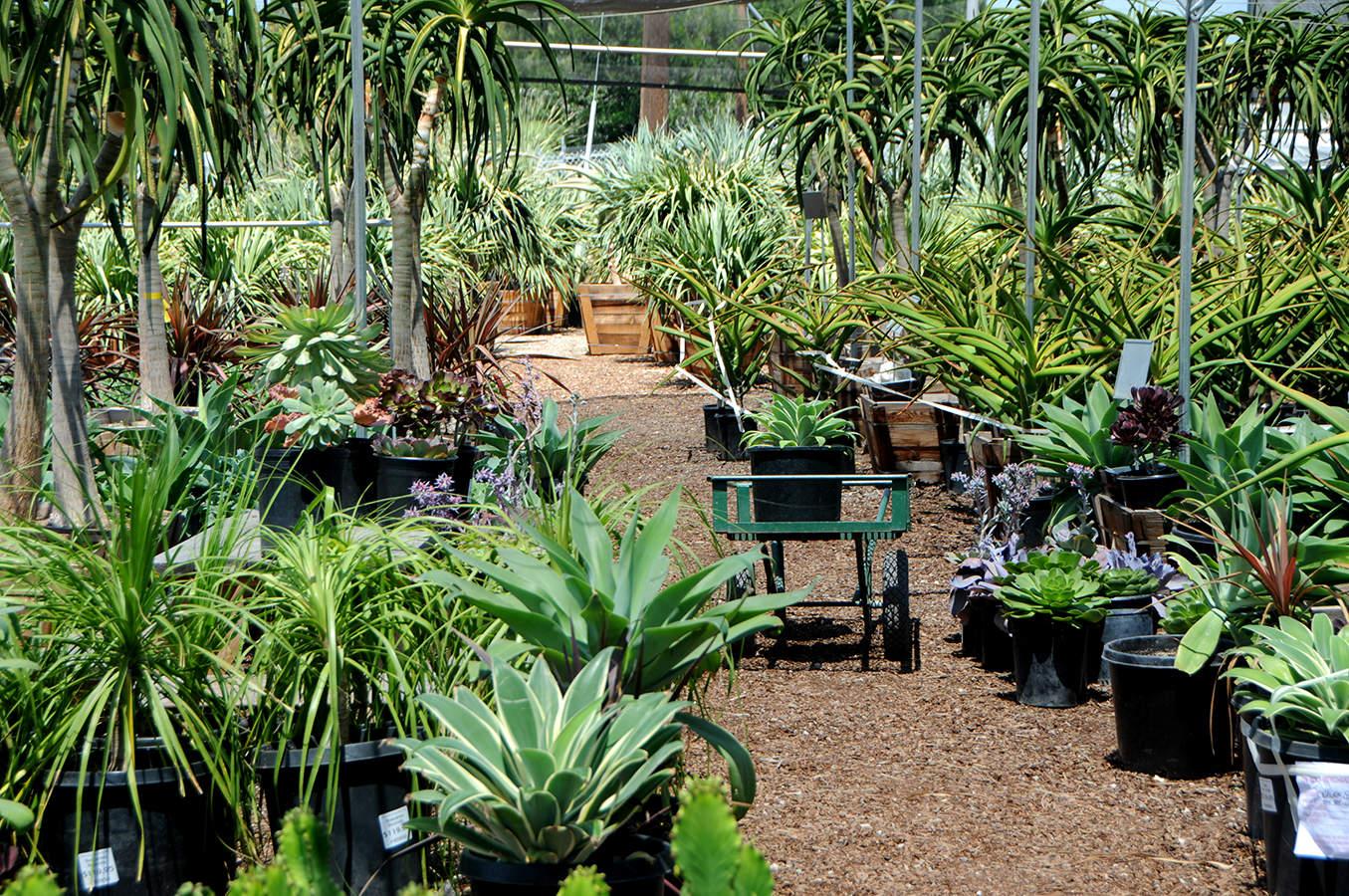 California Whole Garden Nursery