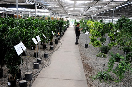 California Greenhouses Whole Nursery Irvine Garden