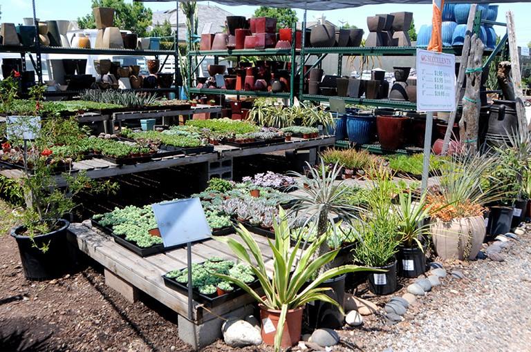 Orange County Whole Plant Supply Oc Succulents